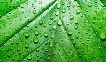 Bright green leaf with dewdrops photo