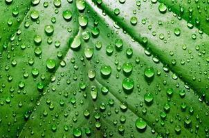 Raindrops on a green leaf photo