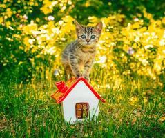 Kitten on a house photo