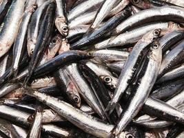 primer plano, de, pila, de, sardinas foto