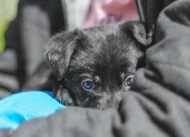 cachorro escondido detrás del brazo de la persona foto
