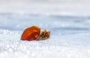 Seashell in foam photo
