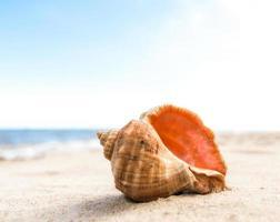 Seashell on the sand photo