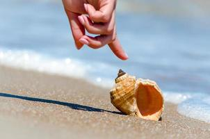 Person pointing to a seashell photo