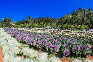 Chiang Mai, Thailand 2017-  Doi Ang Khang agriculture farm