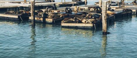 Sealions sleeping on docks photo