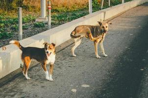 Two dogs on the road photo