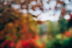 Blurred autumn forest photo