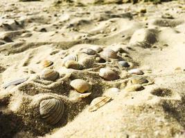 Seashells in sand photo