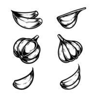 Ilustración de vector dibujado a mano conjunto de ajo