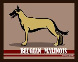 Belgian Shepherd Malinois vector dog eps 10