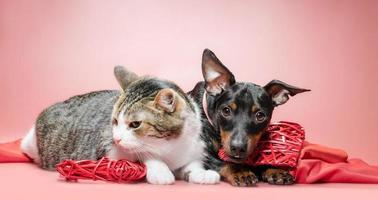 Cat and dog with Valentine's decor photo