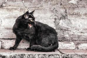 gato silbando en una pared de ladrillos foto