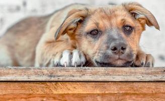 cachorro marrón acostado foto