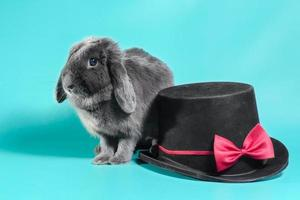 Lop-eared dwarf rabbit with hat photo