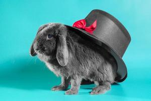 Hat on a bunny photo
