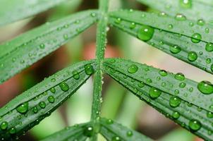 Raindrops on a green leaf close-up photo