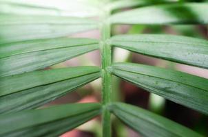 Close-up of a green leaf photo