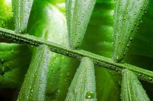 Close-up of a stem and green leaves photo