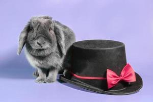 conejo y sombrero sobre un fondo morado foto