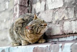 gato en una pared de ladrillos foto