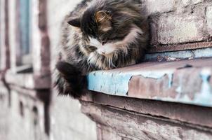 gato de pelo largo en una pared foto