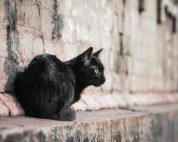 gato negro en la pared de ladrillo foto