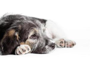 perro triste sobre un fondo blanco foto