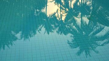 Reflection of Palm Trees in the Pool Water video