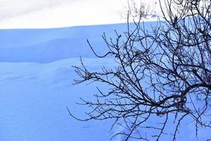 Snowy landscape with tree branches in the garden photo