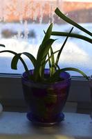 Green flower seedlings in pots on the windowsill photo