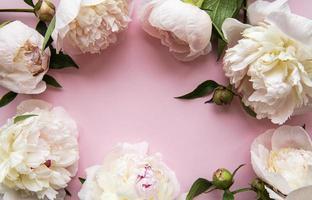 flores de peonía sobre un fondo rosa pastel foto