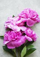 Flores de peonía rosa sobre un fondo de hormigón gris foto