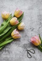 Spring tulips on a concrete background photo