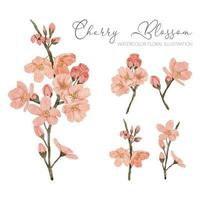 watercolor cherry blossom spring flower illustration element vector