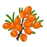 Orange branch of sea buckthorn berries. Vector illustration isolated on a white background. The concept of the image of medicinal plants, herbs.