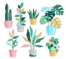 Potted Plant set, Home Plants Illustrations vector