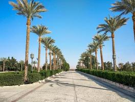 Empty street with palm trees during quarantine in Egypt