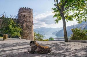 Two dogs relaxing at the Ananuri Fortress in Georgia