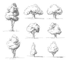 Hand Drawn Tree Sketches vector