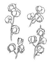 dibujo de ramas de algodon vector