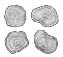 Wood Cut Illustrations vector
