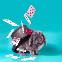 Rabbit with hat and playing cards photo