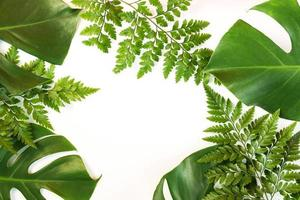 Monstera and fern leaves lay on white background
