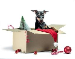 Puppy in a box with Christmas decor photo