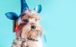 Terrier puppy in a unicorn costume photo