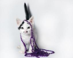 Black and white kitten with purple beads on white background photo