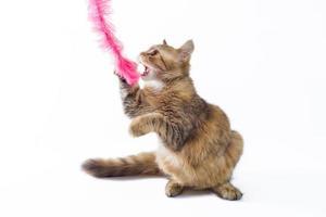 gato jugando con una pluma rosa foto