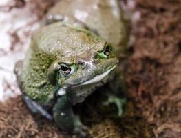 Looking down at a frog photo