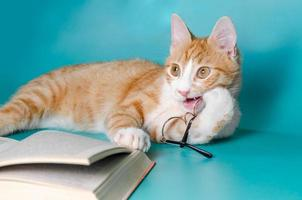 gato masticando gafas de lectura